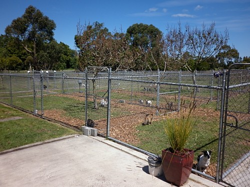 Dog And Cattery Boarding Kennels